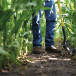 Analyzing Crop Conditions
