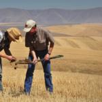 farmers inspect soil health